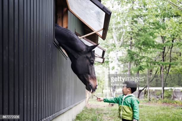 Boy feeding grass to a horse which putting its head out of the window of the horse stable