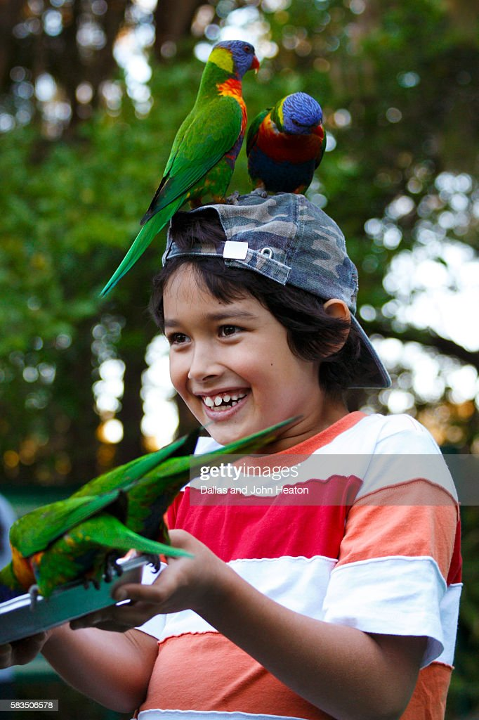 Boy feeding Lorikeets : Stock Photo