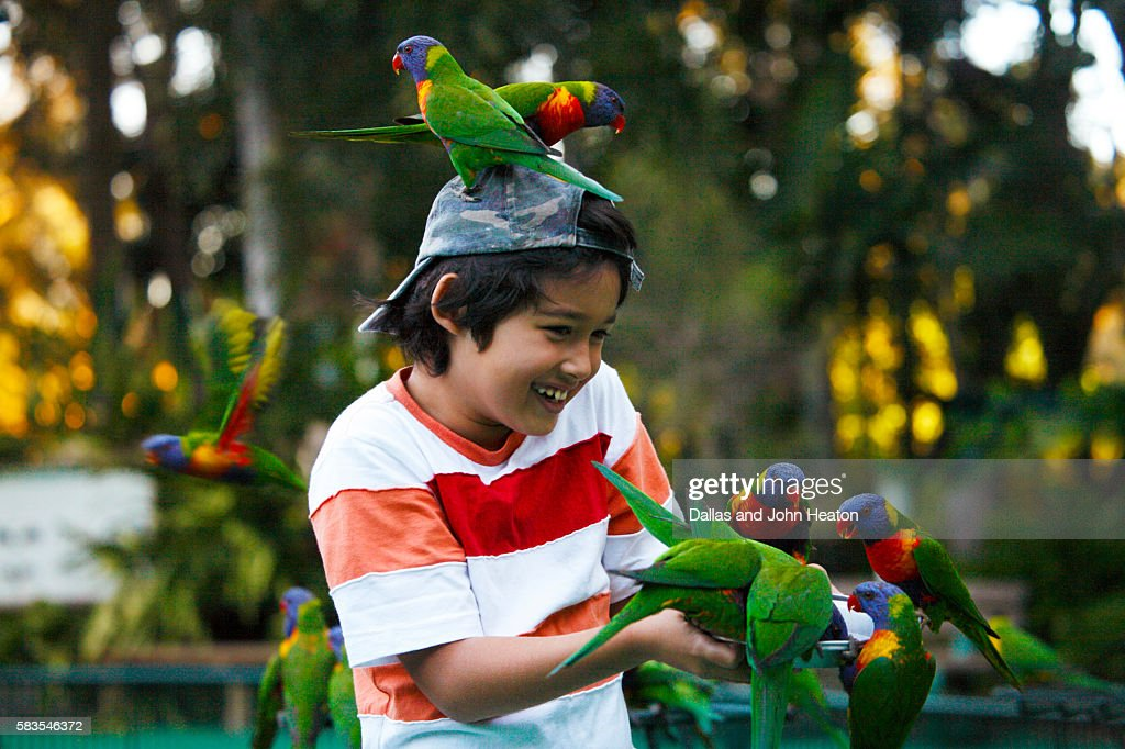 Boy feeding Lorikeets : Stock Photo