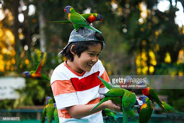 boy feeding lorikeets - tourism stock pictures, royalty-free photos & images