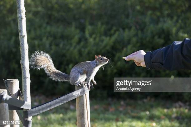 A boy feeds the squirrel at Hyde Park during the last days of autumn on October 26 2017 in London England