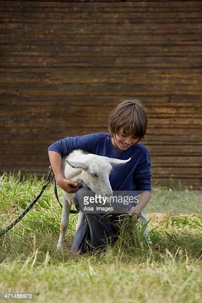 Junge feeing goat