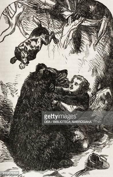 Boy fighting with a bear from The young yachtsmen illustration from the Christmas supplement of the magazine The Illustrated London News volume XLV...