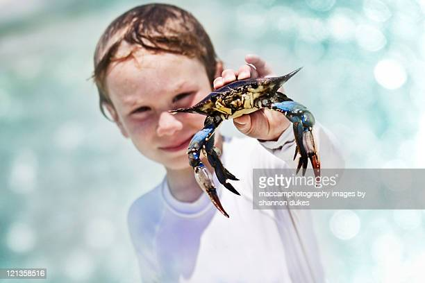 boy finds crab - blue crab stock pictures, royalty-free photos & images