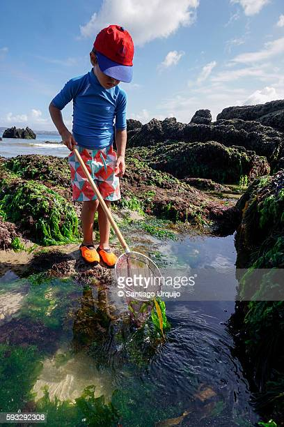 Boy fishing crustaceans on a rocky beach
