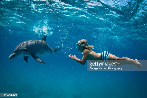 boy free diving with atlantic spotted dolphins - underwater diving ストックフォトと画像