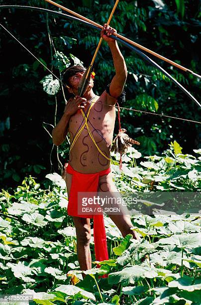 Boy from the Majecodoteri tribe Yanomami indians with bow and arrows The Amazon rainforest Venezuela