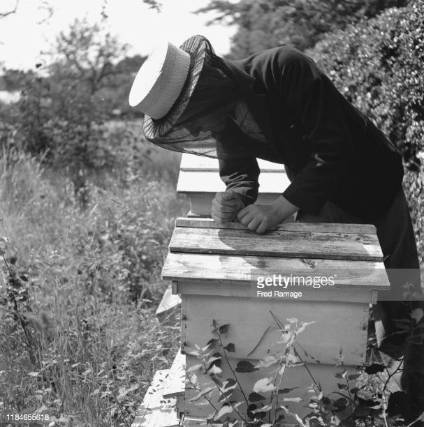 A boy from Wellington College in Berkshire England helping out with the bees on a farm during World War II August 1941