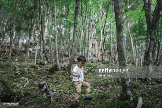 山でたき火のために木を集める少年 - 放浪願望 ストックフォトと画像