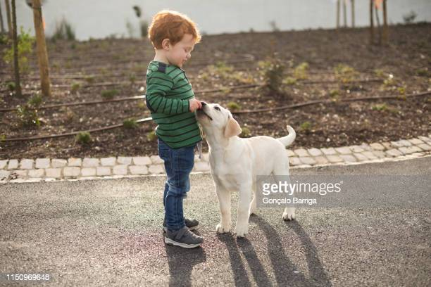 boy giving pet puppy training treat - un animal fotografías e imágenes de stock