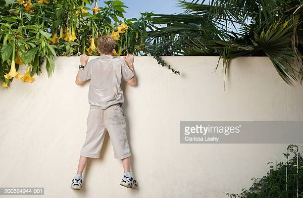 Boy (12-13 years) hanging on wall, looking over other side, rear view