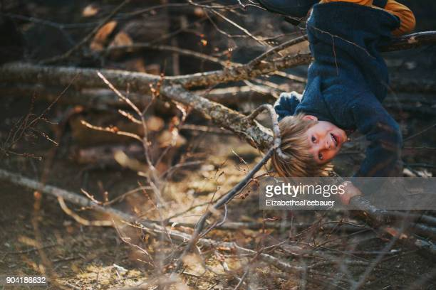 Boy hanging upside down in a tree