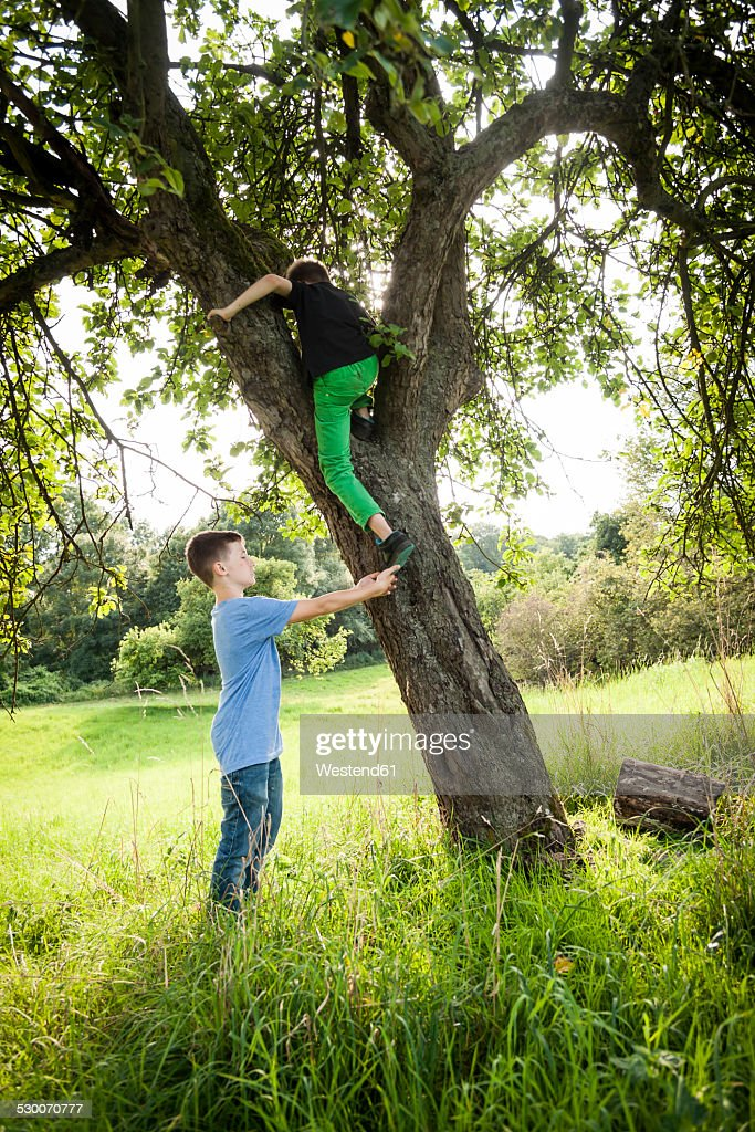Boy helping his friend to climb down a tree : Stock Photo