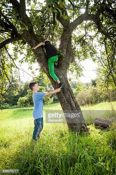 Boy helping his friend to climb down a tree