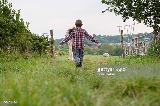 Boy herding cow into field