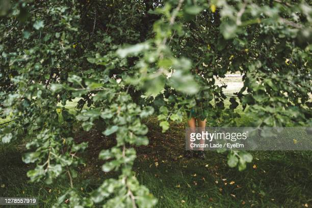 boy hiding behind trees and plants growing in forest - hiding stock pictures, royalty-free photos & images