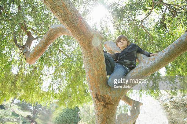 Boy hiding in tree and looking down