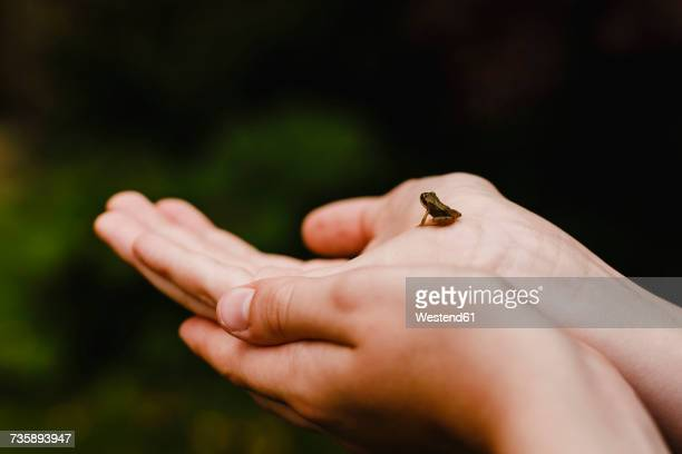 Boy holding a tiny frog