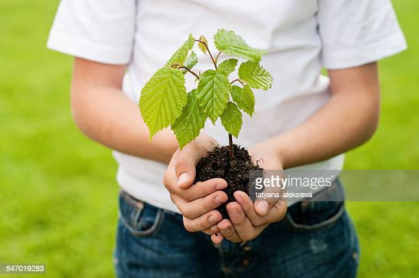 Boy holding a tree sapling in the palm of his hands