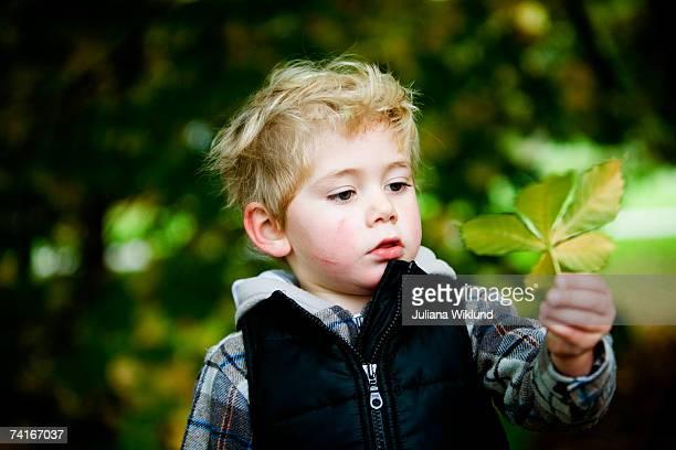 a boy holding an autumn leaf. - alleen één jongen stockfoto's en -beelden