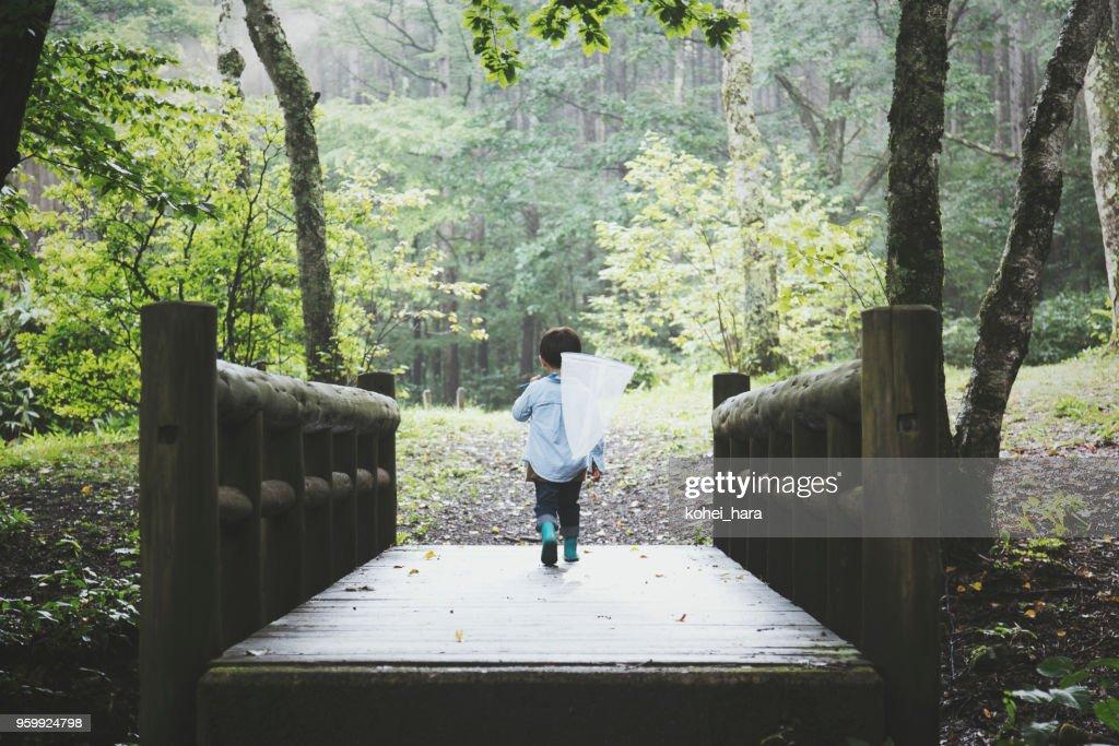 Junge hält Insektennetz und zu Fuß in einem Wald : Stock-Foto