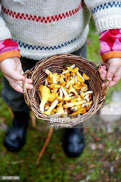 Boy holding basket with chanterelles