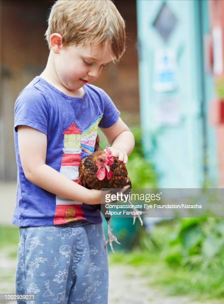 boy holding chicken in urban farm - compassionate eye foundation stock pictures, royalty-free photos & images