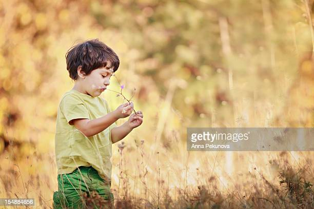 Boy holding flower of the field his hands