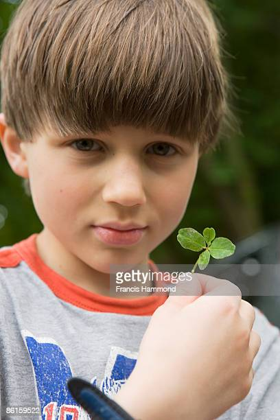 boy holding four-leaf clover - 4 leaf clover stock-fotos und bilder
