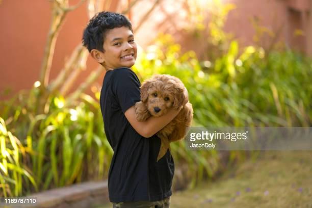 junge hält goldendoodle im freien im vorgarten - goldendoodle stock-fotos und bilder