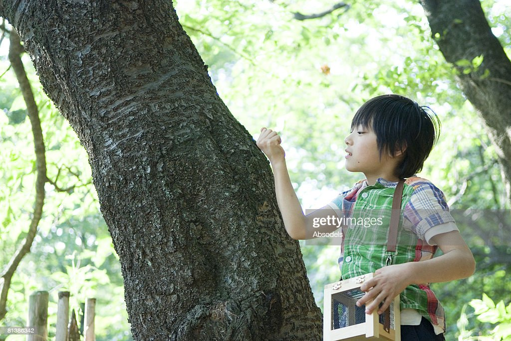 Boy holding insect cage, looking at tree trunk : Stock Photo