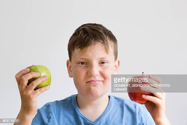boy holding red and green apple - sigrid gombert stock-fotos und bilder