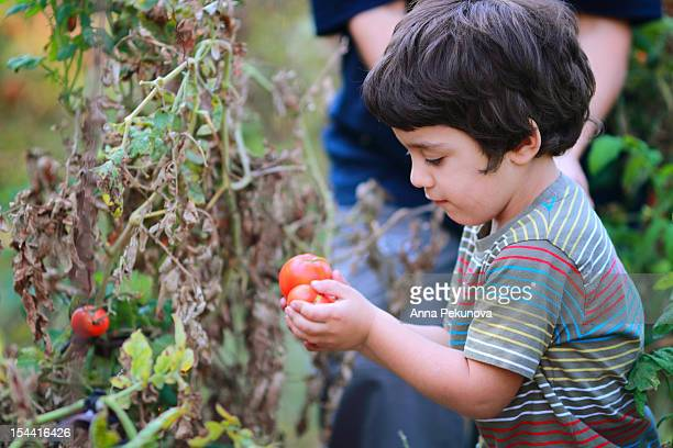 Boy holding tomatoes in his hands