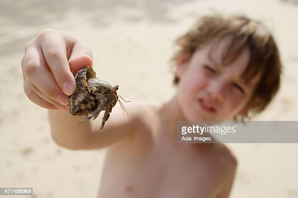 boy holding up hermit crab - hermit crab stock pictures, royalty-free photos & images