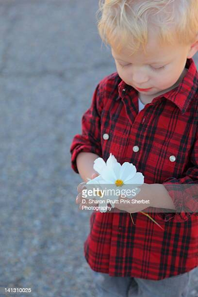 Boy holding white flowers