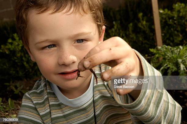 boy (6-7) holding worm, close-up - worm stock photos and pictures