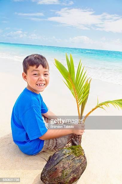 a boy holds a coconut and palm frond while sitting on the beach at the water's edge; kailua, oahu, hawaii, united states of america - kailua beach bildbanksfoton och bilder