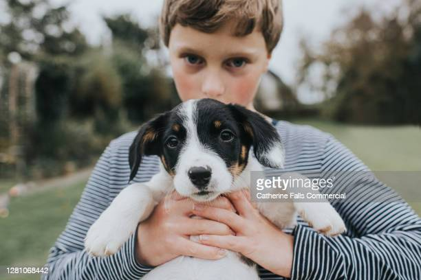 a boy holds a cute puppy in a garden - animal body part stock pictures, royalty-free photos & images