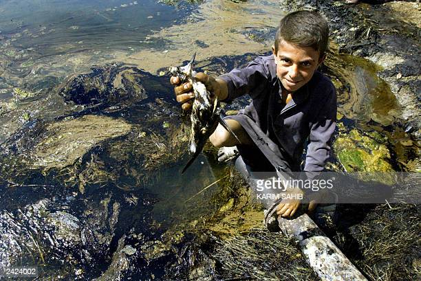 Boy holds up a bird 20 August 2003 killed by an oil slick on the Euphrates River near Al Wardiyah, 325 km west of Baghdad, caused by the sabotage of...