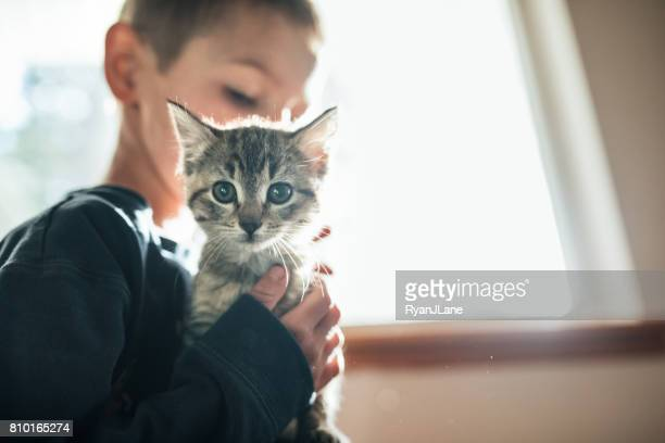 boy hugging kitten - cat family stock pictures, royalty-free photos & images