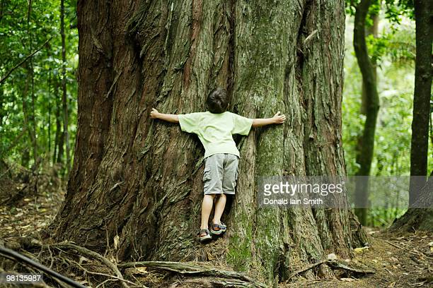 boy hugging tree - tree hugging stock pictures, royalty-free photos & images