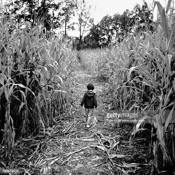 A Boy in a Cornfield