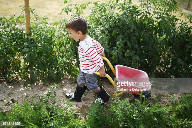 a boy in a vegetable garden - nur kinder stock-fotos und bilder