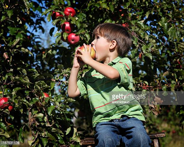 Boy in an orchard