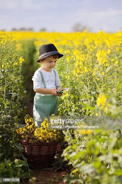 Boy in an yellow rape field