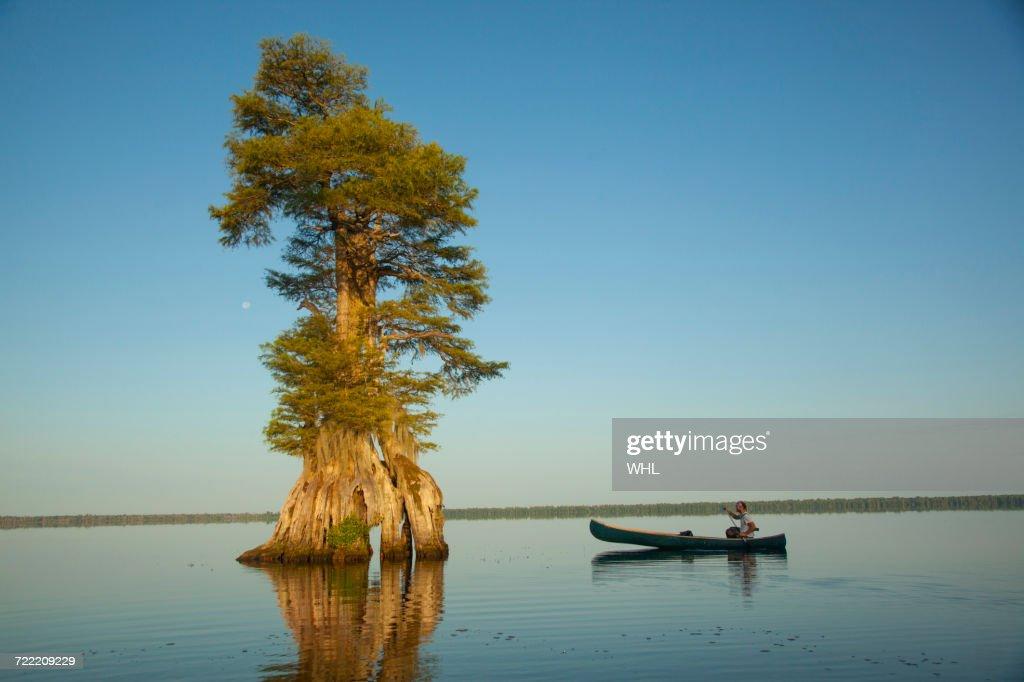 Boy in canoe near tree in river : Stock Photo