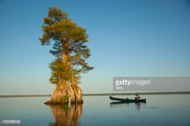 boy in canoe near tree in river - bald cypress tree stock photos and pictures