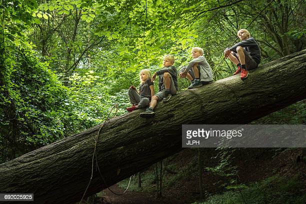 boy in forest sitting on fallen tree - fallen tree stock pictures, royalty-free photos & images