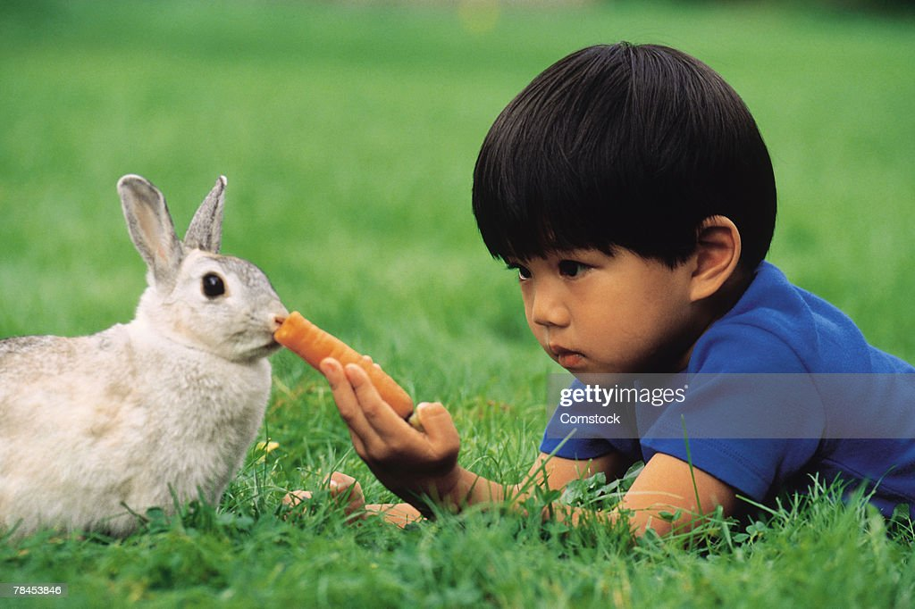Boy in grass feeding carrot to a rabbit : Stockfoto