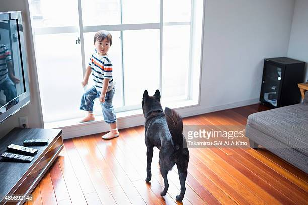 boy in living room with pet dog - japanese spitz stock pictures, royalty-free photos & images